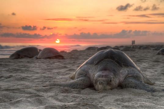 sea-turtles-costa-rica-tourists-1-537x357