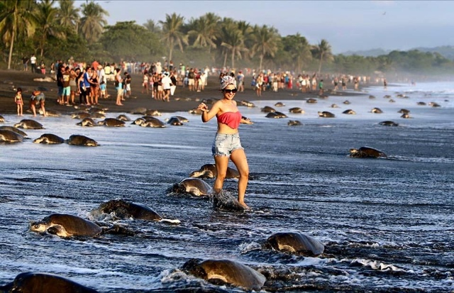 sea-turtles-costa-rica-tourists-4