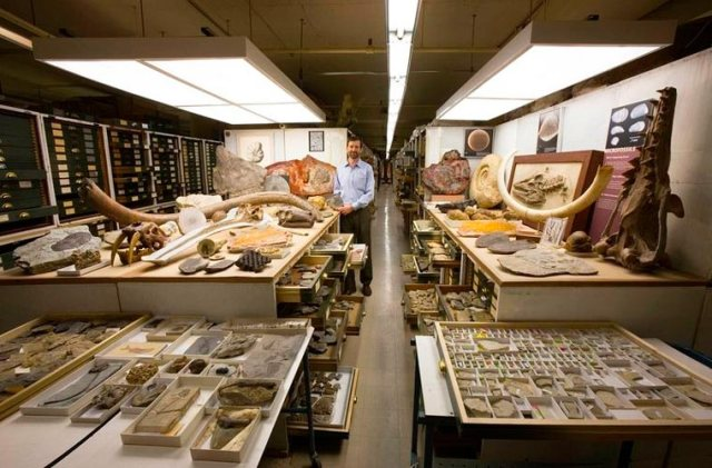 Smithsonian-National-Museum-of-Natural-History-collections-1