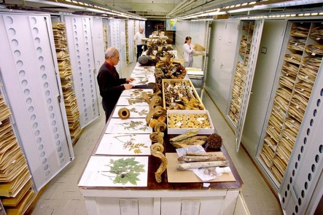 Smithsonian-National-Museum-of-Natural-History-collections-6