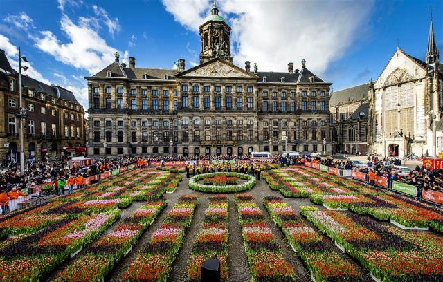 2015-01-17 13:00:47 AMSTERDAM - Belangstellenden plukken tulpen op de Dam op Nationale Tulpendag. Het evenement is het officiele startschot voor het internationale tulpenseizoen dat tot eind april loopt. ANP KOEN VAN WEEL