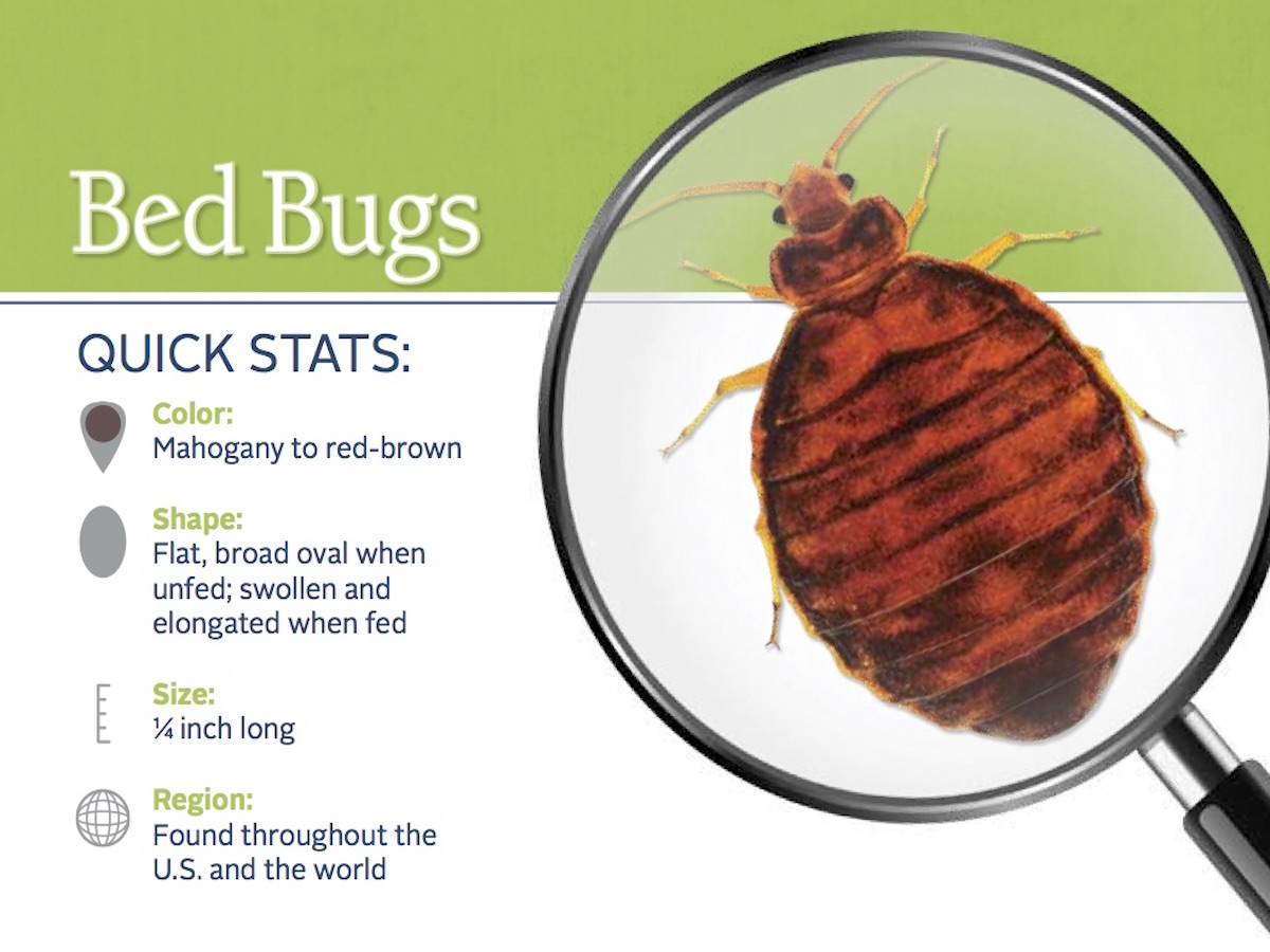 Bed Bug Registry Waterloo Illinois