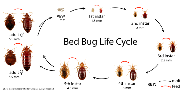Bed Bug Registry Waterloo Ia